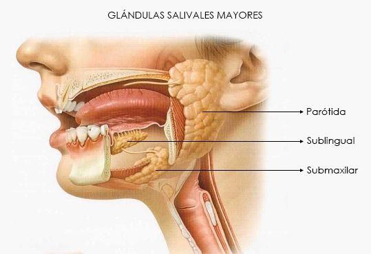 Patología de las glándulas salivares